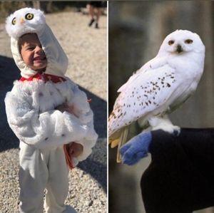 Harry Potter Hedwig Costume